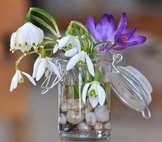 Perce Neige, Muguet, Crocus, Fleurs