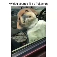 Too cute. - Hunde - The Effective Pictures We Offer You About pets A quality picture can tell you many things. Animal Jokes, Funny Animal Memes, Dog Memes, Funny Animal Videos, Funny Animal Pictures, Cute Funny Animals, Cute Baby Animals, Funny Cute, Funny Dogs