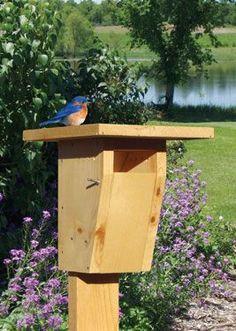 DIY Bluebird House   Grit Magazine