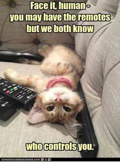 ☮✿★ CATS ✝☯★☮