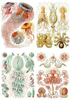 DIGITAL IMAGE SHEET -  Ocean Life