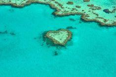 adventure, alienadv, great, barrier, reef, marine, rays, manta, whale, shark, sea, turtles, heart, island, beach, australia