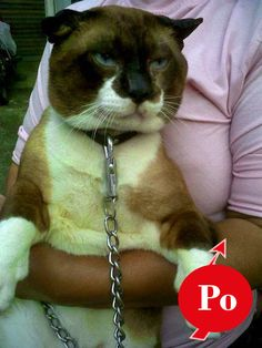 Share Pin: 10 Biggest Cats You Have Ever Seen - @Po
