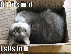 If It Fits I Sits: Image Gallery | Know Your Meme