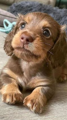 Cute Baby Dogs, Cute Dogs And Puppies, Little Puppies, Adorable Puppies, Doggies, Super Cute Animals, Cute Little Animals, Cute Funny Animals, Baby Animals Pictures
