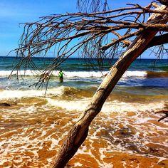 https://flic.kr/p/DTXeuA | Few waves at Shelly beach today!  #upsticksandgo #exploring #beachlife #greensbeach #beach #travel #tasmania #tassiecoast #instagood #instatravel #instagram #discovertasmania #michfrost #waves #narawantapu #nationalparks