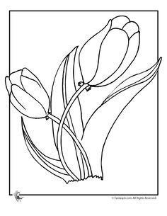 Flower Coloring Pages: Spring Flowers Tulip Flower Coloring Page – Fantasy Jr.