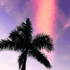 Sunsets on Campus 🌴🌅 Miami Sunset, Uni Life, Pink Sky, Miami Florida, Palm Trees, Sunsets, Modern Art, Clouds, Photo And Video