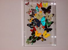 Real Butterflies Mounted in a  Very Bright and by ButterflyArtwork, $595.00