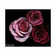 photovogue ❤ liked on Polyvore featuring backgrounds, flowers, pictures, art and filler