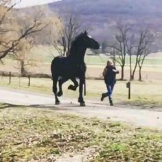 Маленькие Жеребята, Любовь Лошадей, Смешные Лошади Фотографии, Лошадь Видео, Забавные Зверюшки, Самые Милые Животные, Фризская Лошадь, Красивые Лошади, Яркие Обои