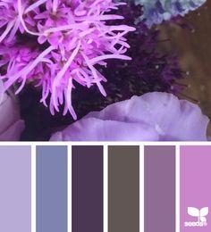 quirky flora 11.09.14 Colour Pallette, Colour Schemes, Color Combos, Color Patterns, Design Seeds, World Of Color, Color Stories, Color Swatches, Color Card