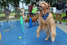 I love the splash pads from the Beneful Dream Dog Park in Alabama!
