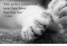 Our perfect companions never have fewer than four feet. Picture Quotes.