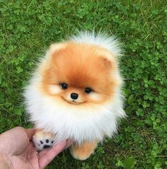 Any dogs and puppies that are cute. See more ideas about Cute Dogs, Cute puppies Tags: Super Cute Puppies, Baby Animals Super Cute, Cute Baby Dogs, Cute Little Puppies, Cute Dogs And Puppies, Cute Little Animals, Cute Funny Animals, Cute Cats, Doggies