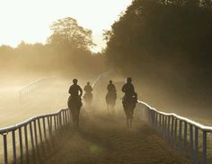 #Ballydoyle morning gallops, with St.Nicholas Abbey (right) and So You Think (2nd right) BehindTheScenes