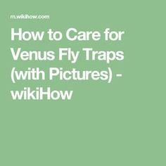 How to Care for Venus Fly Traps (with Pictures) - wikiHow