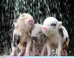 We're squeeling in the rain, just squeeling in the rain. ......