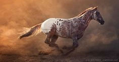 """the-love-of-horses: """" (via UT Spurs For Olena by Alla Berlezova / 500px) """""""