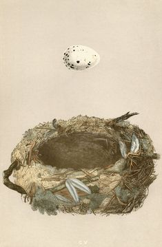 Free Vintage Floral Art Prints | ... free? Here's the MEGA high-res antique bird nest art at 8″ x 12