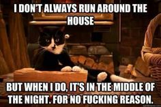 Dos equis spoof kitty style!