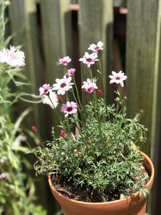 今日は暑いです! お花は元気に咲いてますよ! 詳しくは http://naturefield.jp/73520/?p=5&fwType=pin