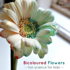 How to dye bicoloured flowers - pretty nature-based science experiment for kids, by Go Science Girls. How to dye bicoloured flowers - pretty nature-based science experiment for kids, by Go Science Girls. Cool Science Experiments, Stem Science, Easy Science, Science Fair, Science For Kids, Science Ideas, Plant Science, Preschool Science Activities, Spring Activities