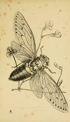 Arcana entomologica,Westwood, J. O. (John Obadiah), 1805-1893
