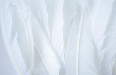 White Feathers by Coral Antler Creative on @creativemarket