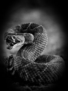 Animated Gif by Beautiful Snakes, Animals Beautiful, Gifs, Snake Facts, Snake Wallpaper, Types Of Snake, Scary Snakes, Colorful Snakes, Gif Photo