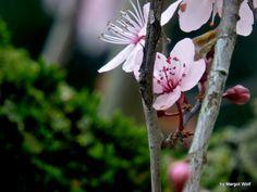 Photo de l'album printemps 2014/2015 - GooglePhotos