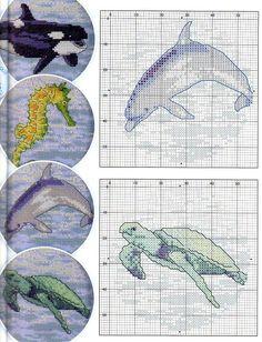 Dolphin, Turtle