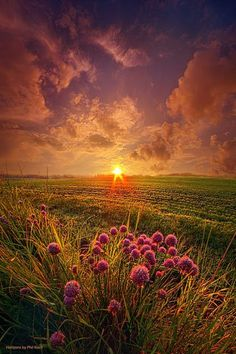 Summer Field at Sunset ~ Marvelous Nature