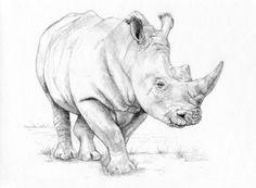 Eli's rhino by Valeria García Durán, via Behance