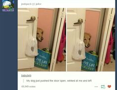 That person's dog just came out of the closet.