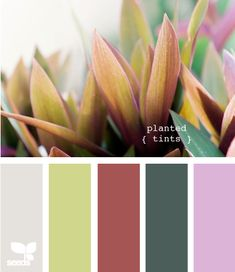planted tints