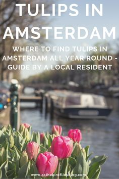 Tulips are everywhere in Amsterdam and across the country, especially at spring during the real Amsterdam tulip seaon... but not only during these months. The Dutch love tulips! Truly! So where can you find tulips in Amsterdam? This blog post will tell you all. Find out where you can find Amsterdam tulips all year round, and also the best time to visit Amsterdam for tulips in the spring. Amsterdam Travel Guide, Visit Amsterdam, Travel Advice, Travel Guides, Travel Tips, Amsterdam Tulips, Things To Do, Good Things, All Year Round