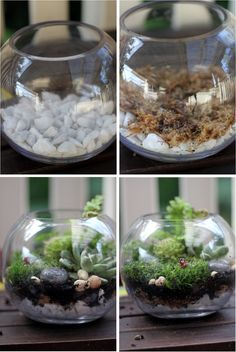 Several times over the years I have thought about making a terrarium. Maybe this summer I finally will. =)
