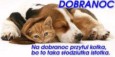 Wierszyki i gify na dobranoc: Gify na dobranoc kotki Animals And Pets, Corgi, Dog Love, Pets, Corgis