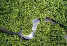 Aerial View of Rainforest in Brazil royalty-free stock photo Rainforest Ecosystem, Amazon Rainforest, Tongass National Forest, Amazon Tribe, Sea Level Rise, Big Oil, In Law Suite, Bolivia, Aerial View