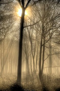 Misty spring morning in woods in Pas-de-Calais, northern France.
