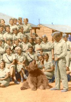 Wojtek Animal Heros, Armed Forces, World War Ii, Old Photos, Ww2, Poland, The Past, Arms, Creatures