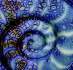 ammonite....  detail.. ceramic by Pauline Barnden