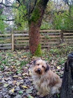 autor: jlez, Poland (tytuł: Natura 9003 - jesień, sad, liście i pies)