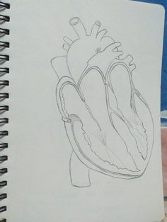 Heart Draw, Heart, To Draw, Sketches, Painting, Tekenen, Hearts, Drawing