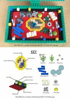 plant cell model made out of Lego Edible Cell Project, Plant Cell Project, Cell Model Project, Animal Cell Project, Plant Science, Science Fair, Science For Kids, Science And Nature, Stem Projects