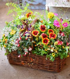 NanaはInstagramを利用しています:「大きなカゴに目いっぱい元気を詰め込んで! お客様オーダーです。 南国の箱庭のよう♡ #花で免疫力アップ #ネットショップ #実店舗 #ふじみ野市 #ギャザリング #埼玉 #生徒募集中 #シャビーシック #ガーデニング #花束植え #園芸店…」 Plants, Instagram, Plant, Planets