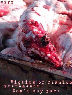 Sick people only Wear FUR! These poor Animals have hurt no one & deserve to live pic.twitter.com/1cP64N6e7M via @dolphinshelp #FurFreeFriday