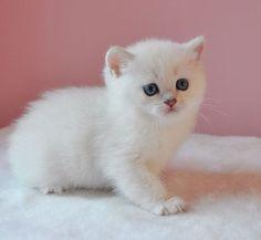 Precious little baby kitten