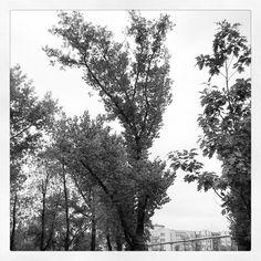 #park  #janapawla2 #wilda #poznan